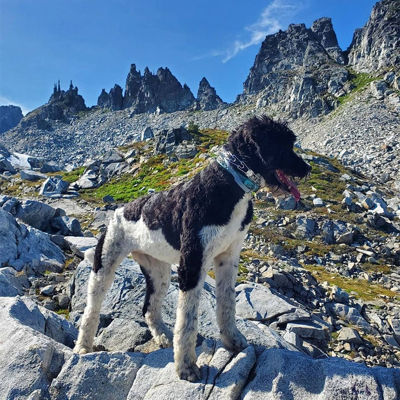 Dog Standing on Rock in the Mountains   Taste of the Wild