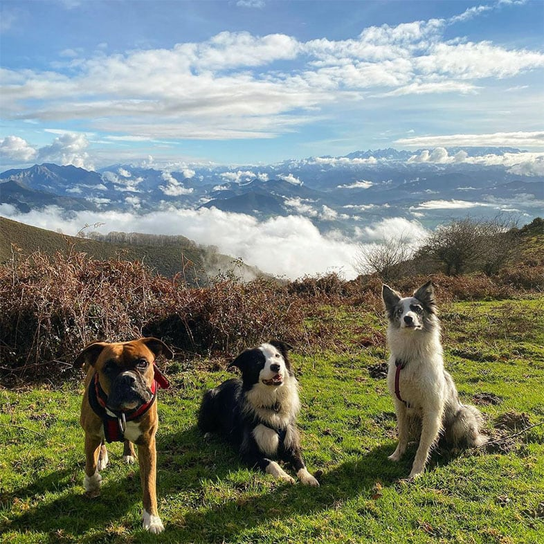Three Dogs Sitting in Grass on Top of a Mountain   Taste of the Wild