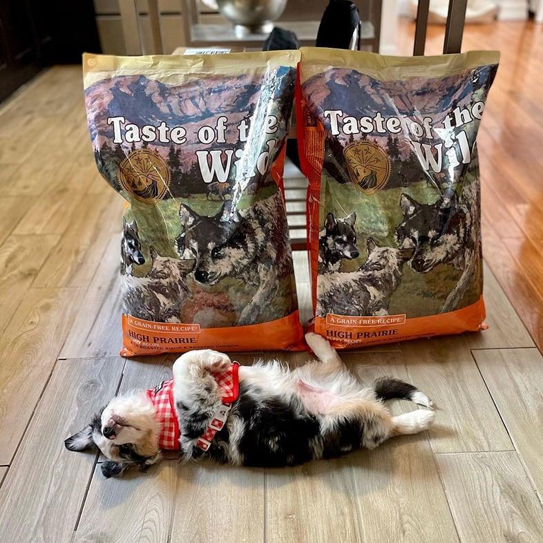 Aussie Dog Lying Paws Up Next to Taste of the Wild Food Bags   Taste of the Wild