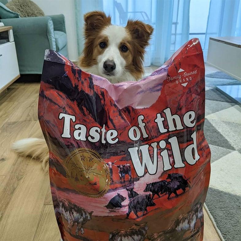 Dog Sitting Behind Taste of the Wild Food Bag   Taste of the Wild