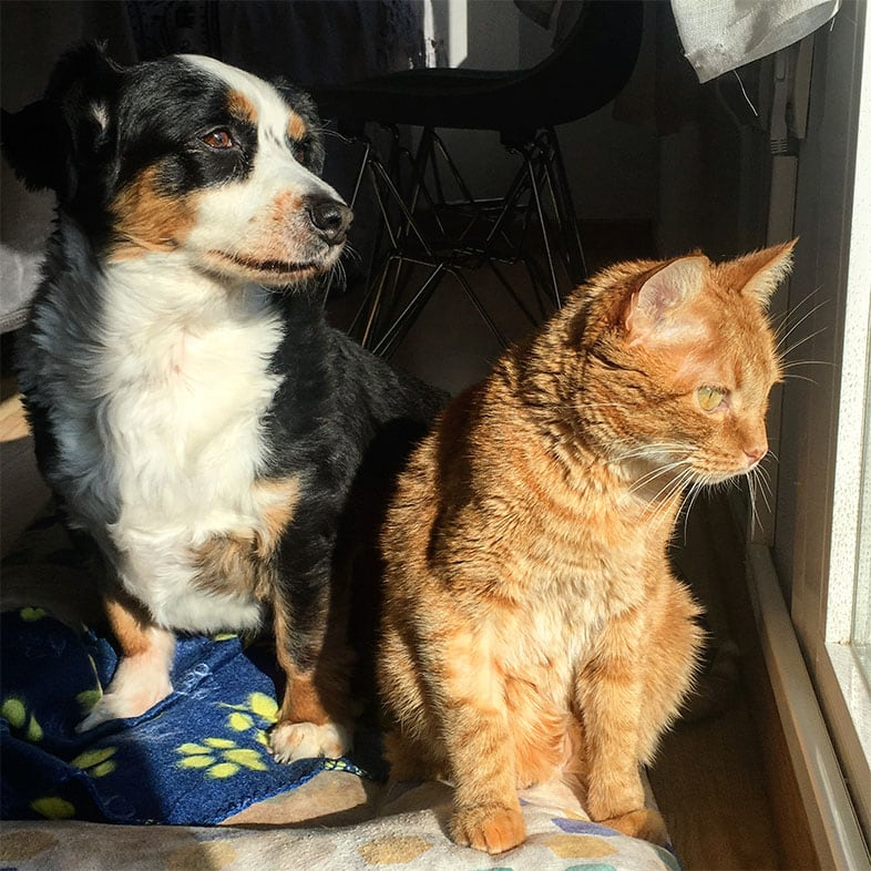 Dog and Cat Sitting Looking Out a Window   Taste of the Wild