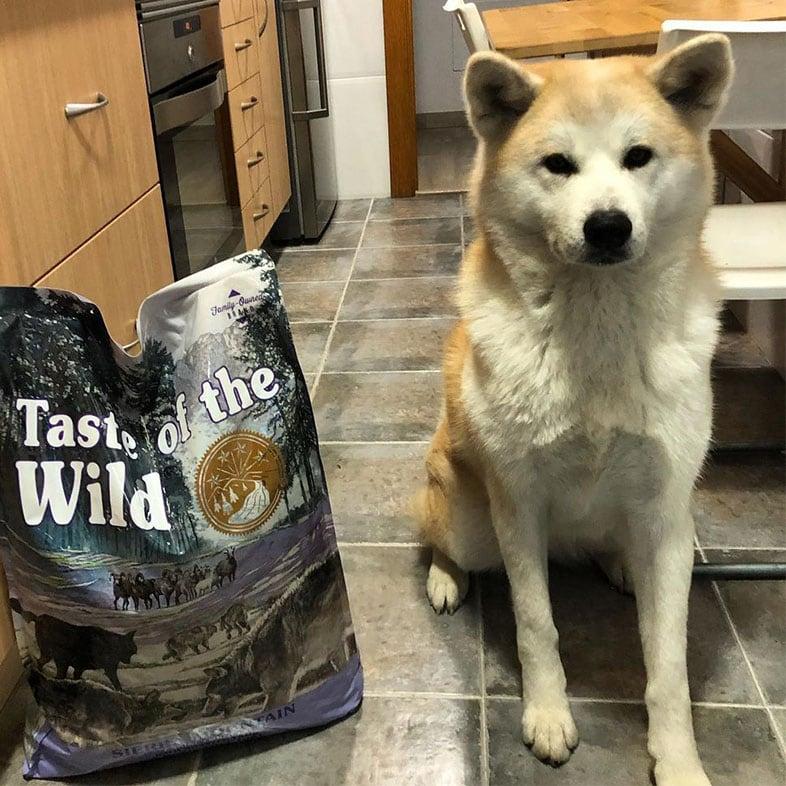 Dog Sitting Next to Taste of the Wild Food Bag   Taste of the Wild