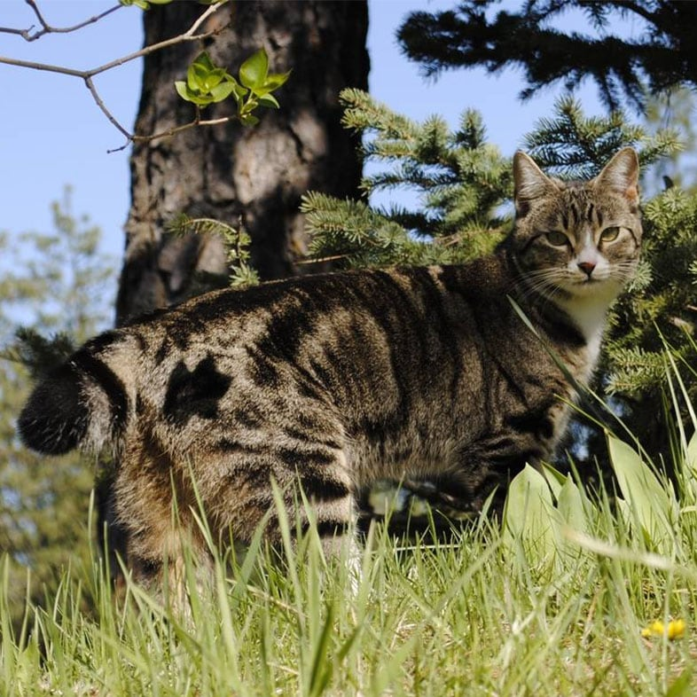 Cat on Grass Next to a Tree   Taste of the Wild