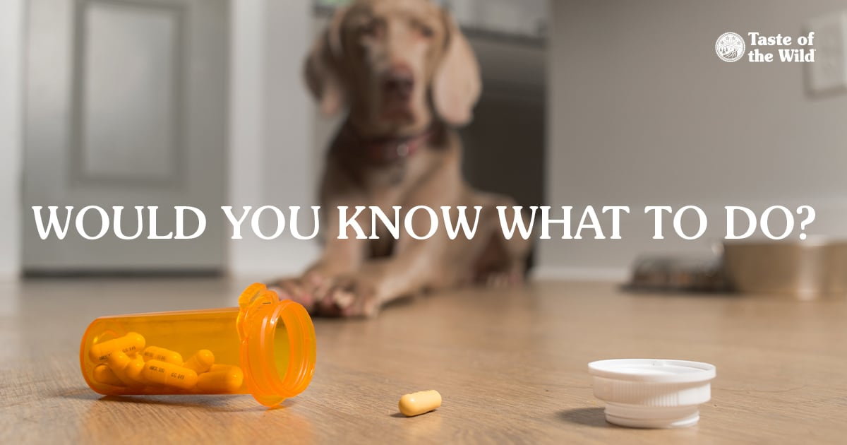 Open Prescription Bottle and Capsules Spilled on the Floor with Dog in the Background   Taste of the Wild