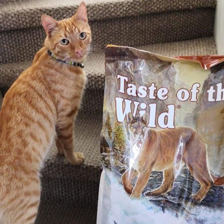 Orange Tabby Cat Looking Back Next to Food Bag   Taste of the Wild