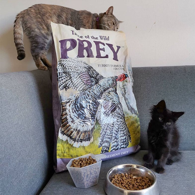 Two Cats with Taste of the Wild PREY Food Bag   Taste of the Wild