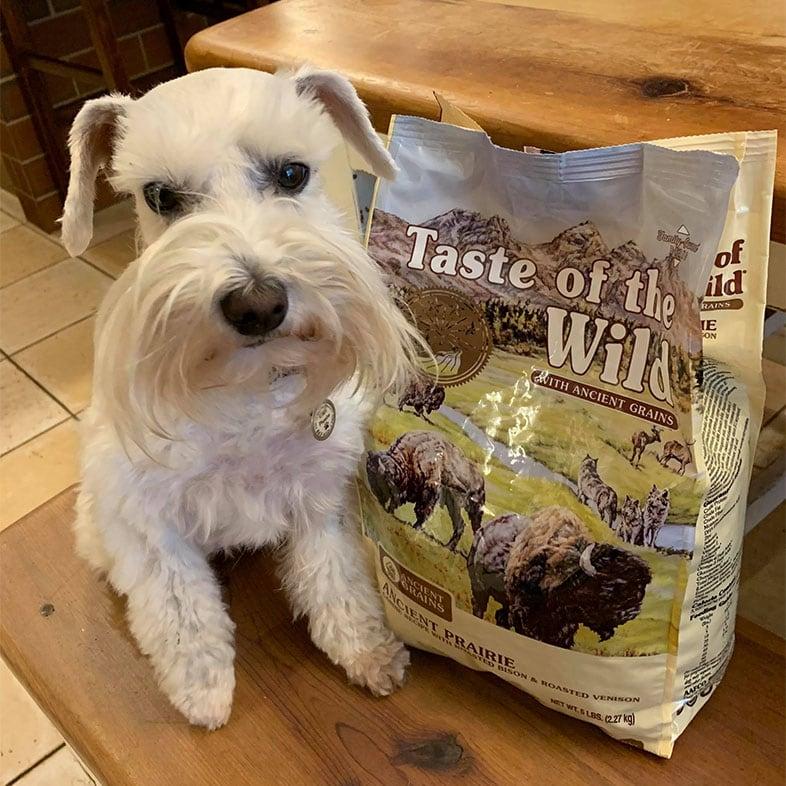 White Dog Sitting Next to Taste of the Wild Food Bag   Taste of the Wild