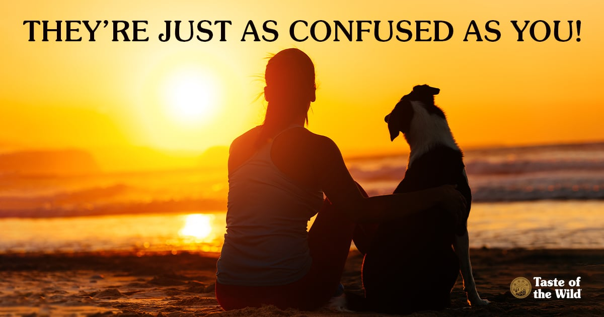 Woman Watching the Sunrise With Dog   Taste of the Wild