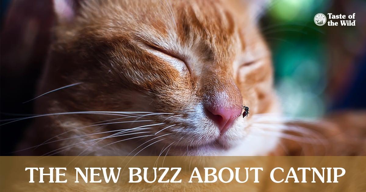 Close-Up of Cat Sleeping   Taste of the Wild