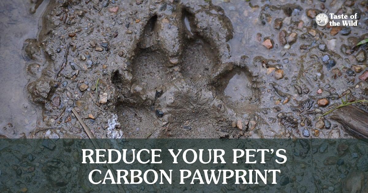 Paw Footprint in the Mud   Taste of the Wild