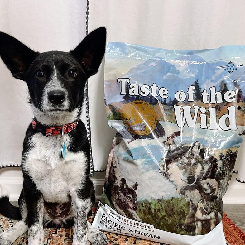Australian Cattle Mixed Dog Sitting Next to Taste of the Wild Food Bag   Taste of the Wild