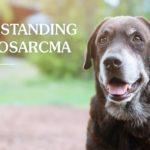 Lymphosarcoma in Pets | Taste of the Wild