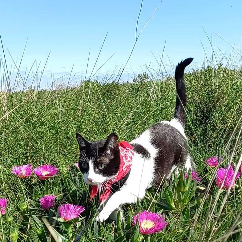 Common European Cat Walking in a Field   Taste of the Wild