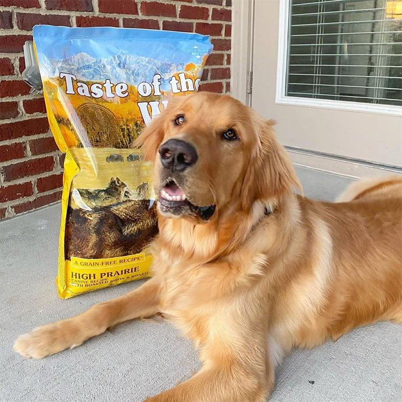 Golden Retriever Lying Next to Taste of the Wild Food Bag   Taste of the Wild