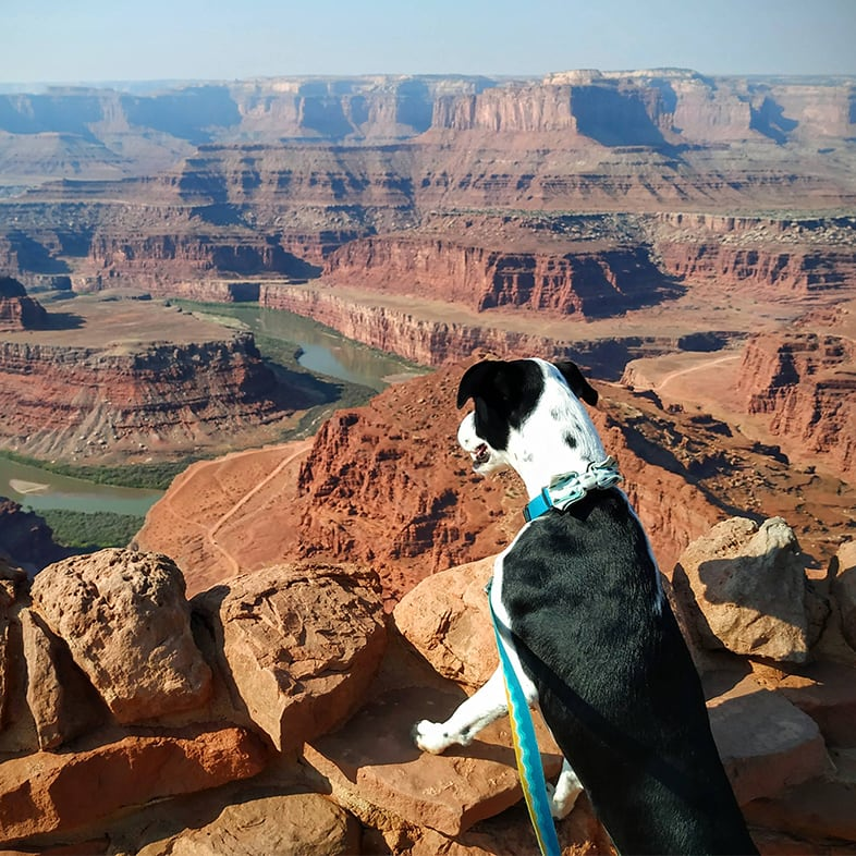 Pointer Mix Dog Looking Over a Canyon   Taste of the Wild