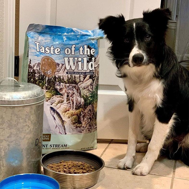 Border Collie Sitting Next to Taste of the Wild Food Bag   Taste of the Wild