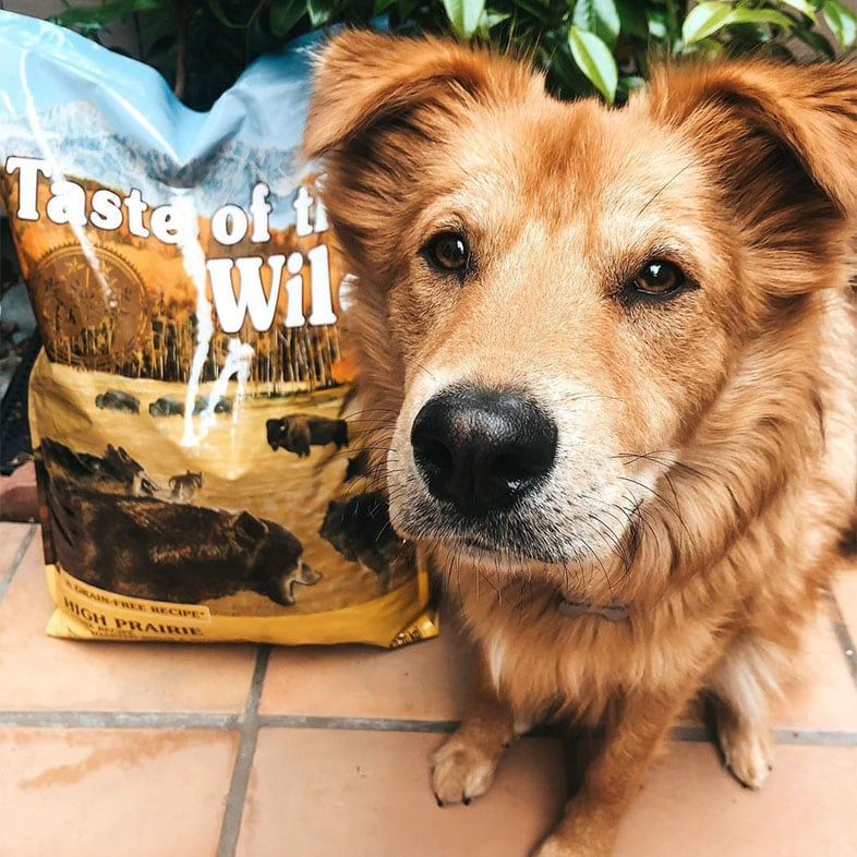 Dog Looking at Camera Next to Taste of the Wild Food Bag   Taste of the Wild