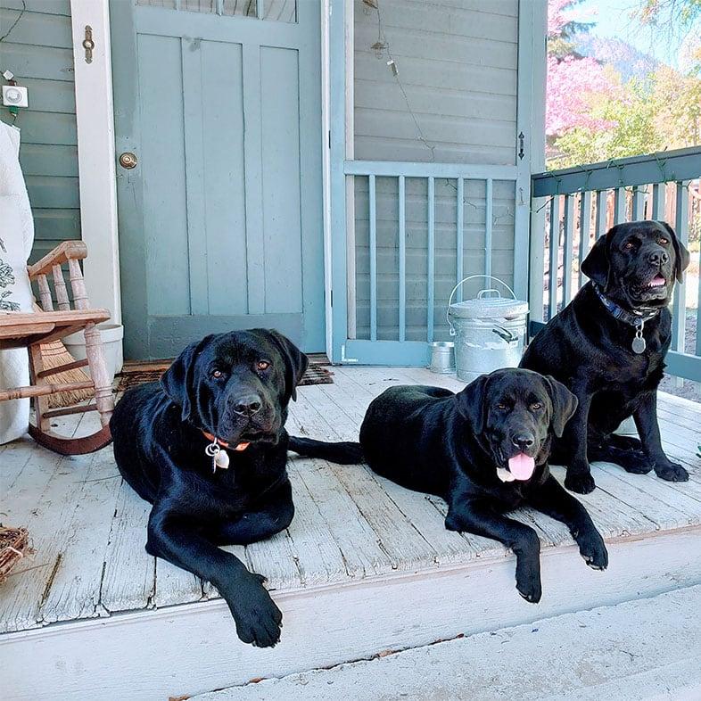 Three Black Labrador Retrievers on a Porch   Taste of the Wild