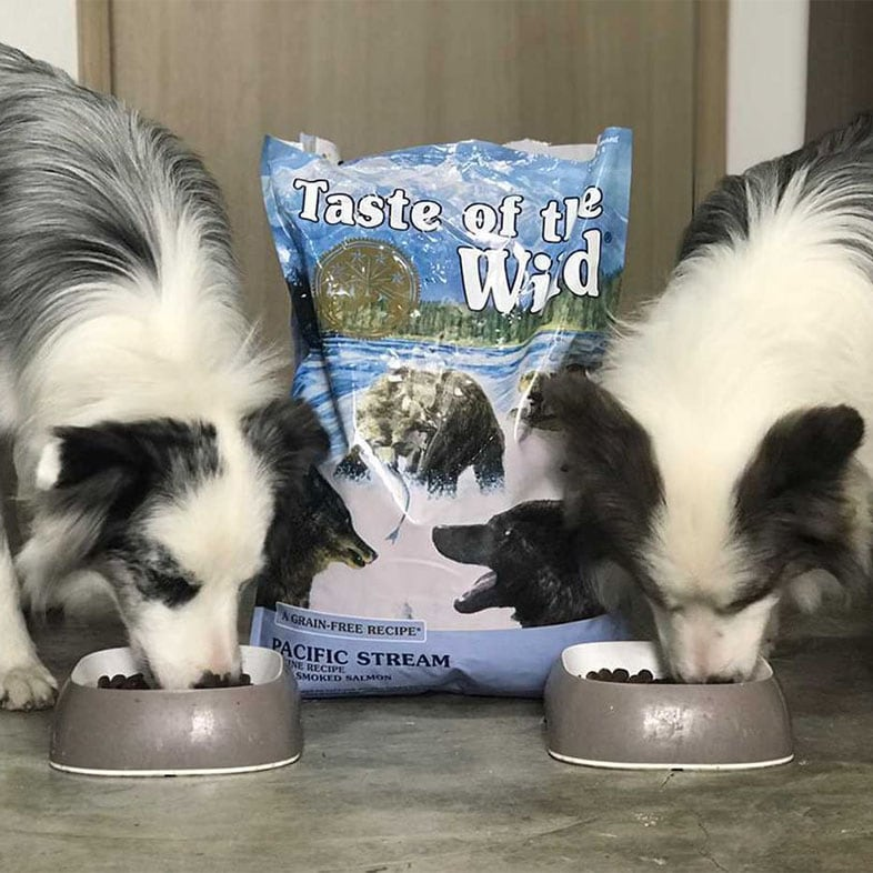 Two Dogs Eating Taste of the Wild Food   Taste of the Wild