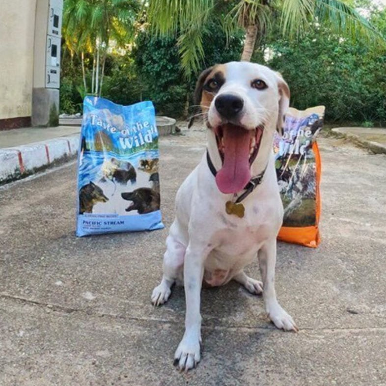 Dog Sitting in Front of Taste of the Wild Food Bags | Taste of the Wild